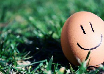 grass_egg_smiley_smile_humor_macro_54212_1920x1080